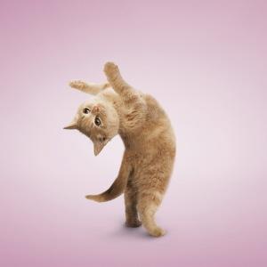 yoga-cats-2